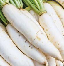 DAIKON RADISH SEEDS 200+ JAPANESE white RADISH garden VEGETABLE FREE SHIPPING