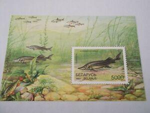1997 Belarus Fishes M/S imperf m/m Mi.231, Z36