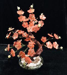 Jade bonsai tree cherry blossom - Red