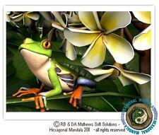 © ART - Red eyed green tree FROG and frangipani - Original Artist Print by Di