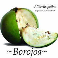 ~BOROJOA~ Alibertia Patinoi Legendary Colombian Fruit Aphrodisiac 50 RARE SEEDS