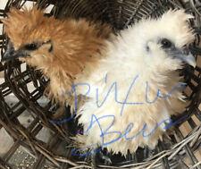 5 Fresh Fertile Chicken Hatching Eggs Rare Breeds Assorted Barnyard Mix Friz