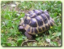 Mélange de graines a semer pour tortue terrestre