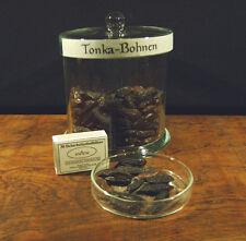Tonkabohnen (Dipterix odorata) 50 Stück
