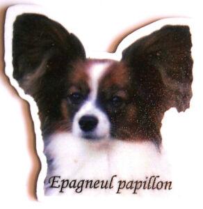 Epagneul Papillon Magnet Aimant Chien + Ardoise Magnétique Frigo + Marqueur B3