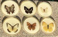 "Vintage Matsvi Real Butterfly Coaster Set (6 + Rack) 3 1/2"" Made In Israel"