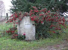 PHOTO LA TOMBE DE YUL BRYNNER A L' ABBAYE DE BOIS AUBRIS /11X15 CM #1