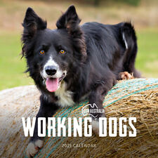 2021 Our Australia Working Dogs Square Wall Calendar 30 X 30cm by Paper Pocket