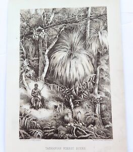 .A 100% GENUINE 1879 HISTORY of AUSTRALASIA LITHOGRAPH. TASMANIAN FOREST SCENE.