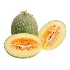 20pcs Sweet Fruit Honey Dew Melon Seeds Cantaloupe Jumbo Hami Melon Seed Yard