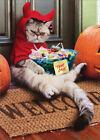 Cranky Devil Cat Avanti Funny Halloween Card photo