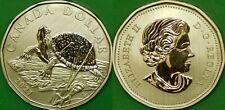 2021 Canada Blanding's Turtle Dollar Graded as Specimen From Original Set