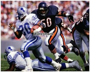 Chicago Bears Mike Singletary Chasing Detroit Lions Barry Sanders 8 X 10 Photo