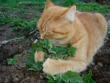 2 PIECE HAPPY CAT PACK CATNIP AND CATGRASS SEEDS 320 SEED PACK