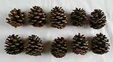 Lot of 10 Small 3 inch Pinecones for decoration crafts etc