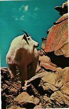 Vintage Postcard - Mountain Goat On Rocks Mammals Of North America Unpost #3064