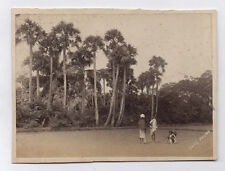 PHOTO ANCIENNE Vers 1880 Palmiers Date Palms Asie Inde ? Madras ? Arbre Palmier