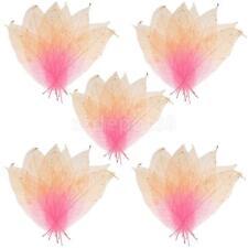 50pcs Natural Magnolia Skeleton Leaf Leaves for Scrapbooking DIY Craft #1