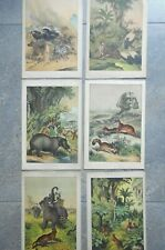 1877 Sketches from Nature, Animals, Six Instructive Picture Book Lithographs
