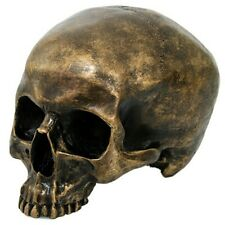 "Brushed Gold PIRATE SKULL Sculpture, 7.5"" Resin Aged Bronze/Copper Human Remains"