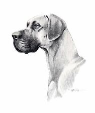 Great Dane Pencil Dog Drawing 8 x 10 Art Print Signed by Artist Djr