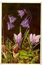 """Vintage Soldanella & Crocus Postcard from Switzerland 3.5"""" x 5.5""""  Stehli"""
