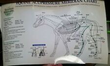 Lot of 11 Equine Horse Acupressure Wall Charts on 6 Laminated 2 Sided Sheets Vet