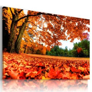 PARK GOLDEN AUTUMN TREES Perfect  View Canvas Wall Art Picture L492 MATAGA