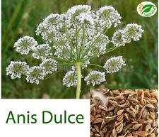 Anis Dulce ( Pimpinella anisum ) 300 semillas seeds  matalahúva o matalahúga