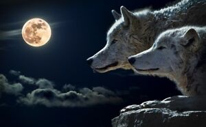 Wolf, torque wolf, moon Print poster Gloss quality painting print 250GSM A4