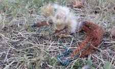 Ground Bird Trap Live Trappola Uccelli Piege Oiseaux Vogelfalle Trampa Pajaros