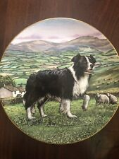 Royal Doulton Dogs In Action Border Collie Decorative Plate