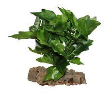 Vivarium Plant,Small Artificial Leafy Ivy Plant Mounted On Cork bark