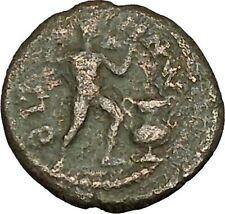 PHILIP II Roman Caesar Bizya Thrace Silenos Satyr Wine Krater Roman Coin i40123