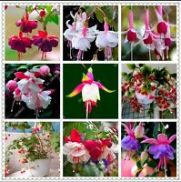 US-50pcs/bag Fuchsia Seeds Potted Flowers seeds,bonsai seeds for home garden