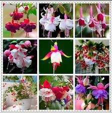 US-200pcs/bag Fuchsia Seeds Potted Flowers seeds,bonsai seeds for home garden
