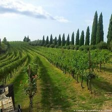 4 Tage 3* Hotel Bareta Kulinarik Olivenöl Wein Verona Venetien Urlaub Italien