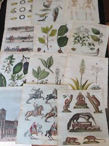 Bertuch , Natural History Engravings, Germany ca: 1798, 13 plates