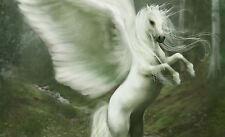 POSTER a3-Bianco Pegasus in piedi sulle Zampe Posteriori (Foto Stampa D'arte di cavallo)