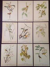 1942 Vintage AUDUBON LOT of 9 YELLOW BIRDS INSTANT DECOR Color Art Lithographs