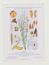 FICHE N°8  PLANTE MEDICINALE/COMITE INTERMINISTERIEL-GENET /Ed.Montaudon