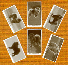 Chow Chow Named Set Of 6 Dog Photo Trade Cards