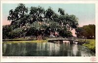 New Orleans LA~Audubon Park~Washington Oak Hang Over Bridge~c1905 Detroit Pub Co