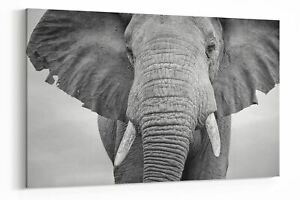 Panoramic B&W Elephant Canvas Wall Art Living Room Prints Pictures