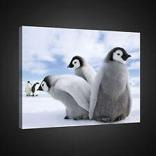 BILD BILDER CANVAS WANDBILD POSTER FOTO LEINWAND PINGUIN VOGEL WINTER 3FX1822O4