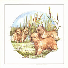 """NORFOLK NORWICH TERRIER DOG FINE ART LIMITED EDITION PRINT - """"In the Reed Bed"""""""