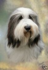 Bearded Collie A6 Blank Card Design No 4 By Starprint