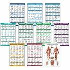 """10 Pack  Exercise Workout Poster Set  Muscular System Chart ,LAMINATED,18"""" x 27"""""""