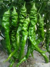 Early Hot green Pepper seeds Spicy Chili Vegetable seed Survival heirloom Garden