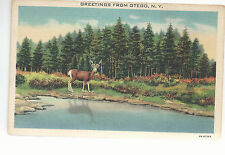 Greetings From  Otego  NY   Deer, Lake and Forest   Unused  Postcard 784